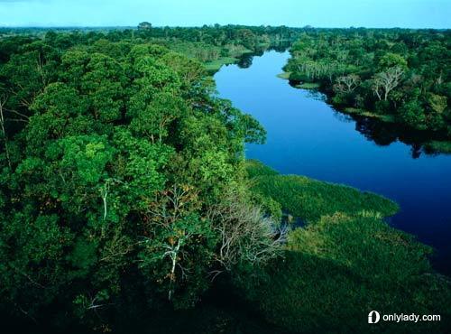 于亚马逊原始森林