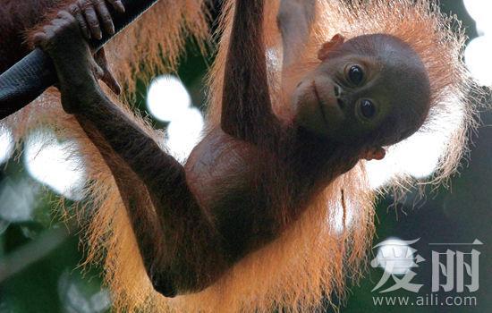 动物不凶猛 探秘马来西亚沙巴雨林