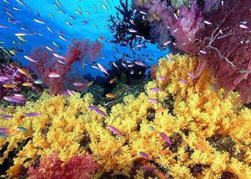 电视塔下,北京太平洋海底世界博览馆是由中国和